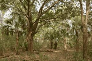 woods-sm